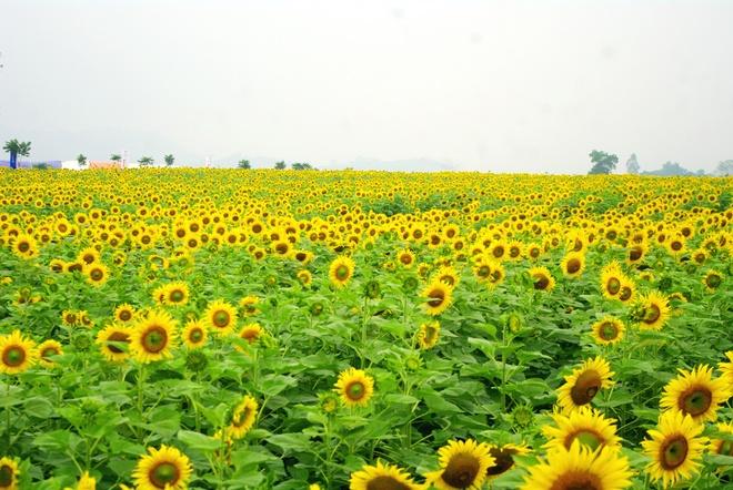 Dịch vụ sang tên đất tại huyện Nghĩa Đàn