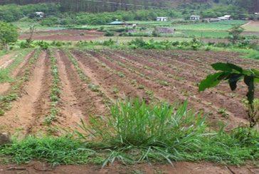Thủ tục chuyển đổi mục đích sử dụng đất nông nghiệp thành đất ở tại Nghệ An